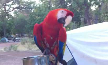 Meet Kramer the Macaw